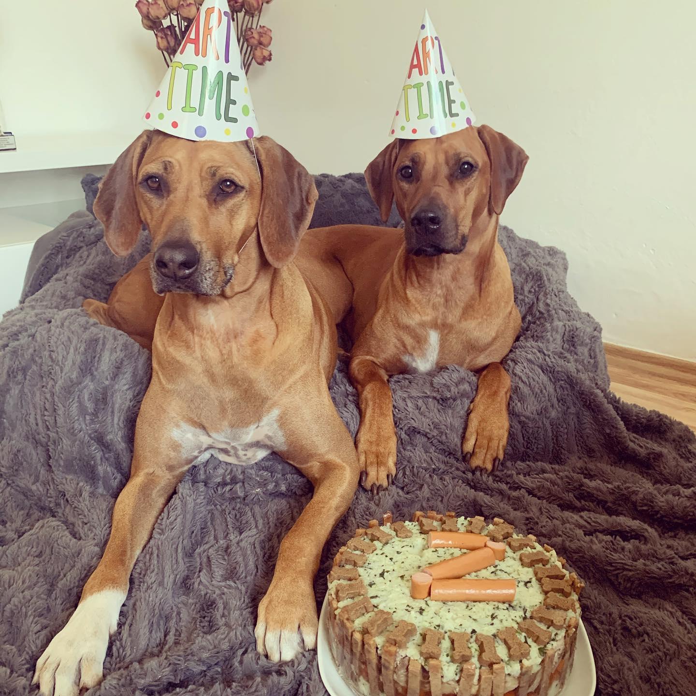 "Happy Birthday ""K"" litter !!!"